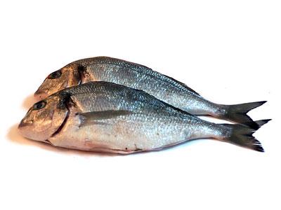 Fish-Gokhan-Okur