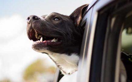 reisziekte bij honden ©andrew pons