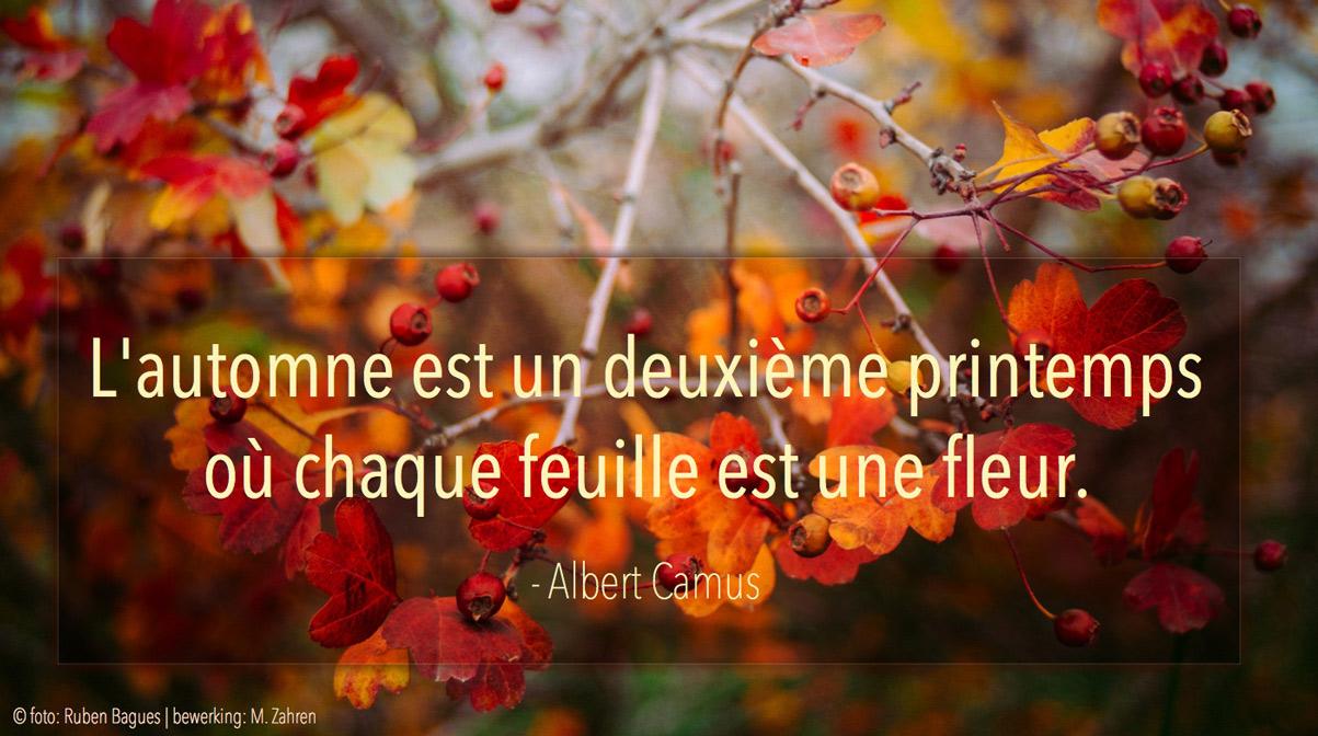 Citaten Albert Camus