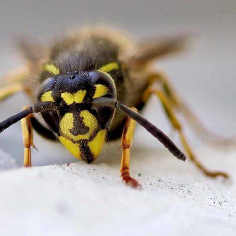 Wespen-, bijen-, en muggensteken