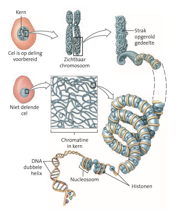 cellstructuur en functie